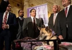 Victoria's Law Puppy Mills
